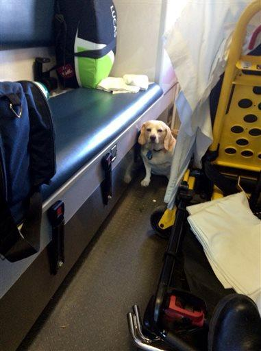 Right in the Feels… Dog rides outside Ambulance to stay with owner