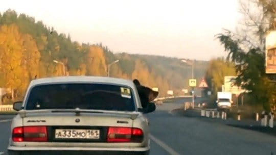 A Guy Driving With a Bear Avoids a Ticket . . . Because It Was Wearing a Seatbelt